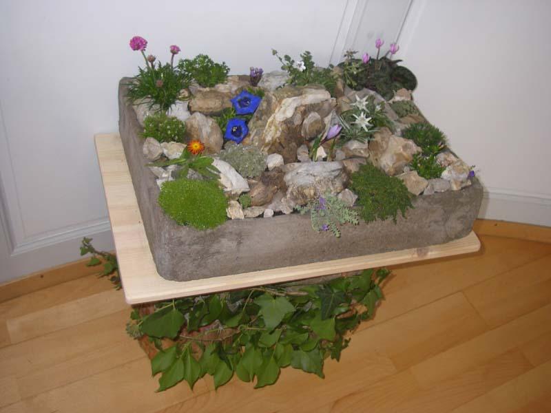 Le jardin alpin des rochers de Naye
